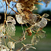 dead fairy wings